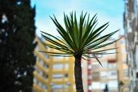 Lisboa 2mb edits-98