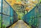 stroll-edits-39