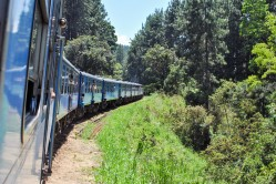 Train Kandy to Nuwara Eliya-15