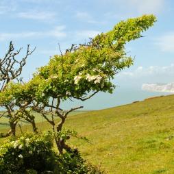 Walk the Wight-49