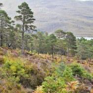 Highland edits-176