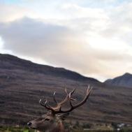 Highland edits-30